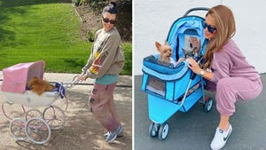 Celebrity Dog Strollers -- Canine Carriages!