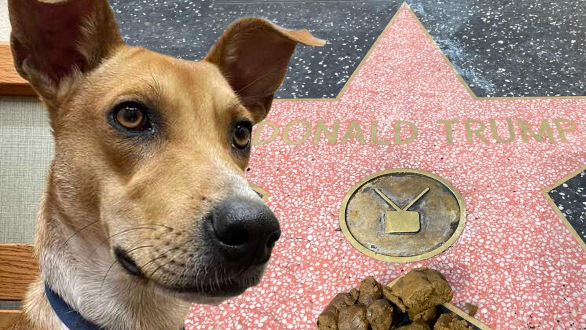 Donald Trump's Hollywood Walk of Fame Star Dog Pooper Revealed thumbnail
