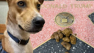Donald Trump's Hollywood Walk of Fame Star Dog Pooper Revealed
