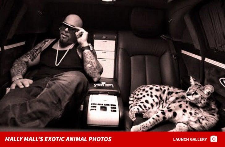 Mally Mall's Exotic Animal Photos