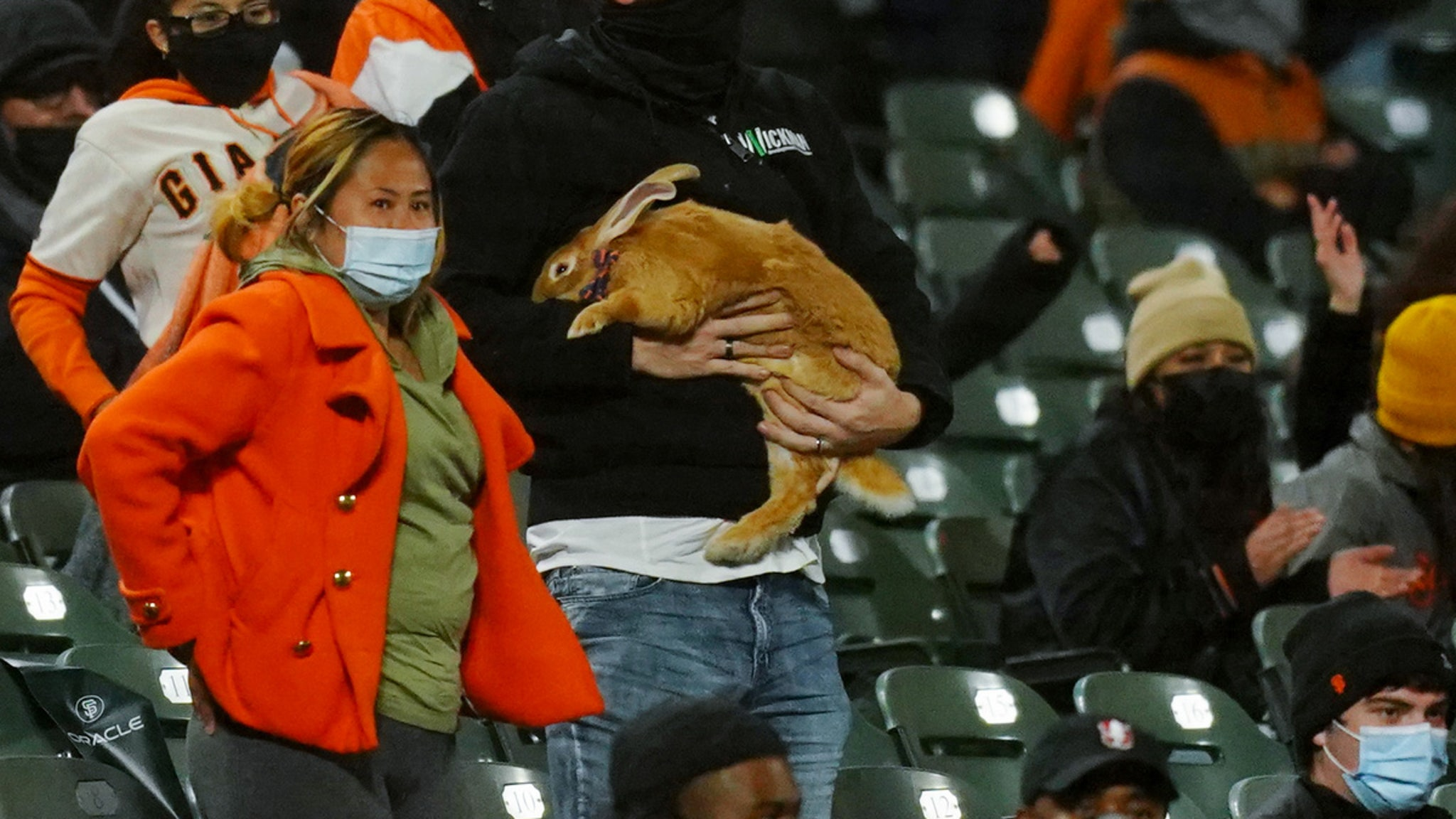 SF Giants Fans Bring Therapy Bunny To Game, Most Adorable Spectator Ever? thumbnail