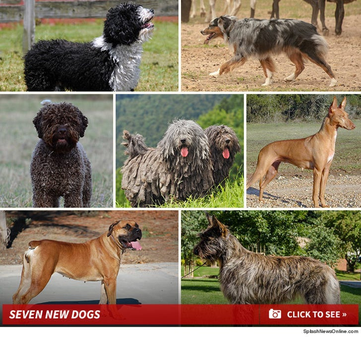 National Dog Show -- The Seven New Dogs