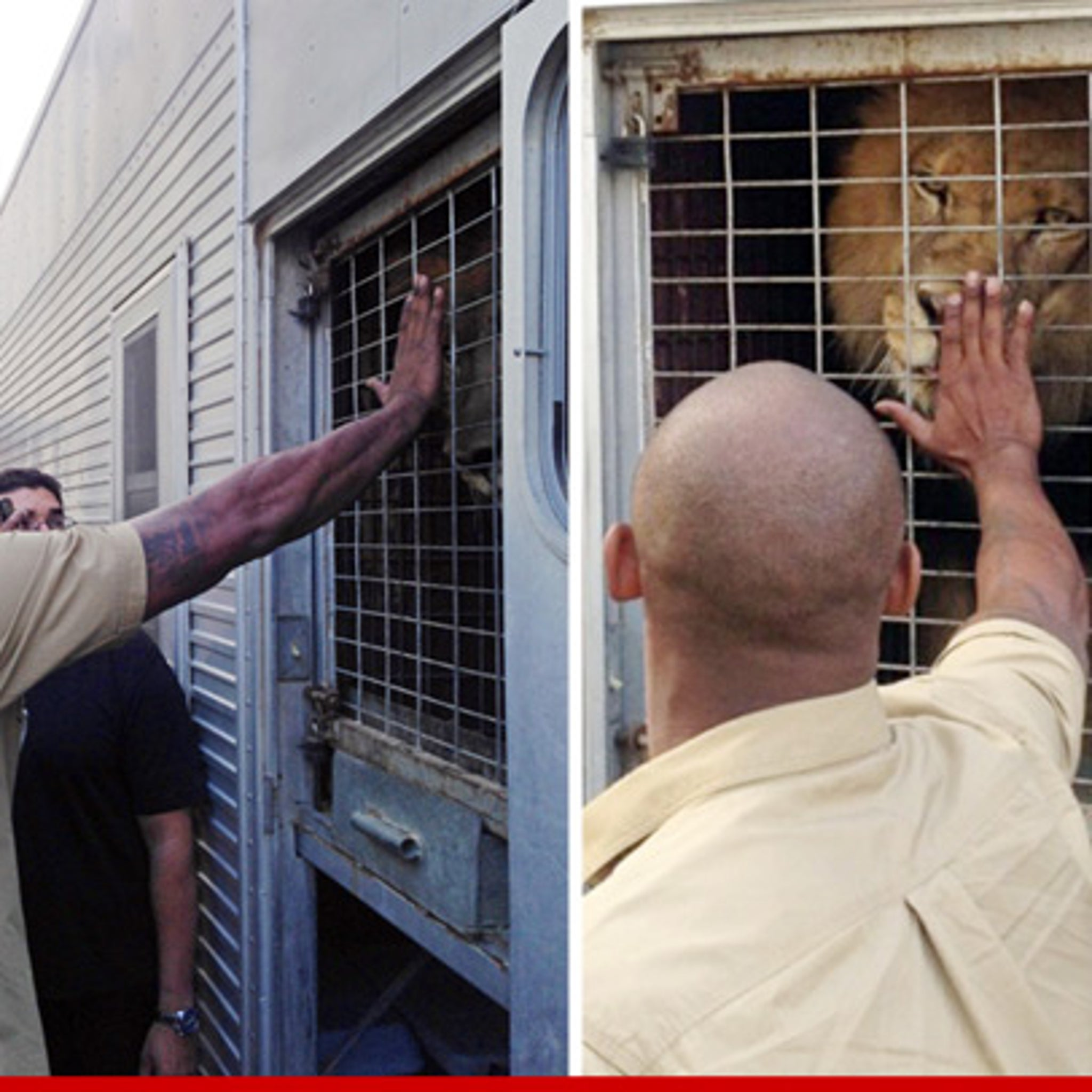 Kobe Bryant Risks Most Valuable Hand To Pet A Lion