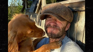 David Beckham Posts Photo with New Family Pooch for Int'l Dog Day